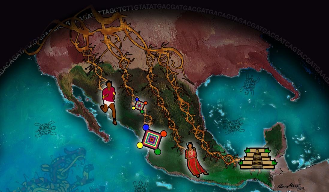 DEVELAN EVOLUCIÓN GENÉTICA EN POBLACIÓN INDÍGENA MEXICANA