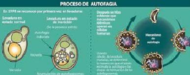 PODRÍAN REDUCIR COMPLICACIONES DE COVID-19, LA VITAMINA D, RESVERATROL, TREHALOSA Y METFORMINA