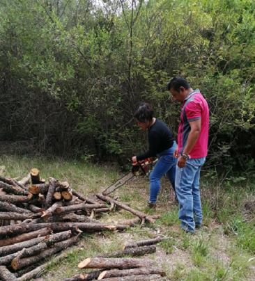 PRODUCCIÓN SOSTENIBLE DE CARBÓN VEGETAL EN OAXACA